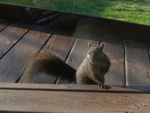 Don't be taken in by that look of rodent nonchalance. She's hankering for more almonds.