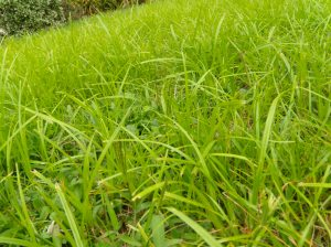 An act of kindness any neighbour will appreciate? You bet your grass.
