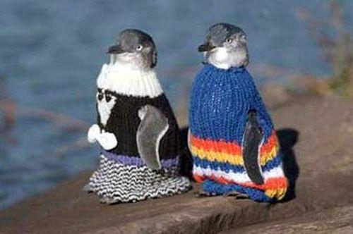 PenguinSweaters